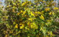 Naurhækken efterår