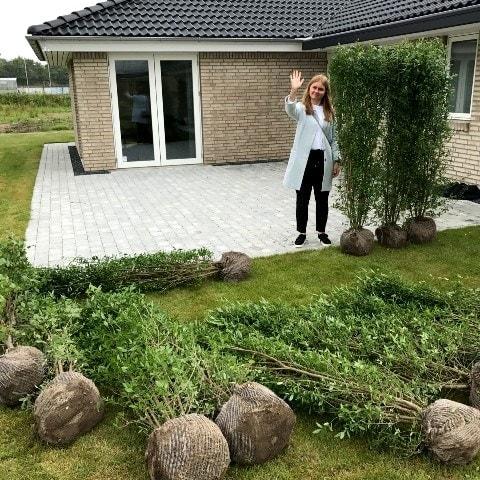 fædighæk liguster terrasse